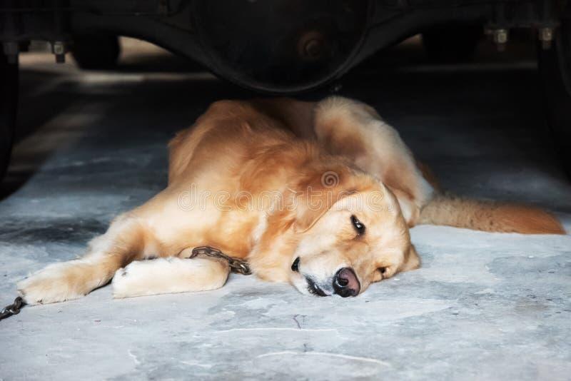 Hund som ligger under bilen arkivbilder
