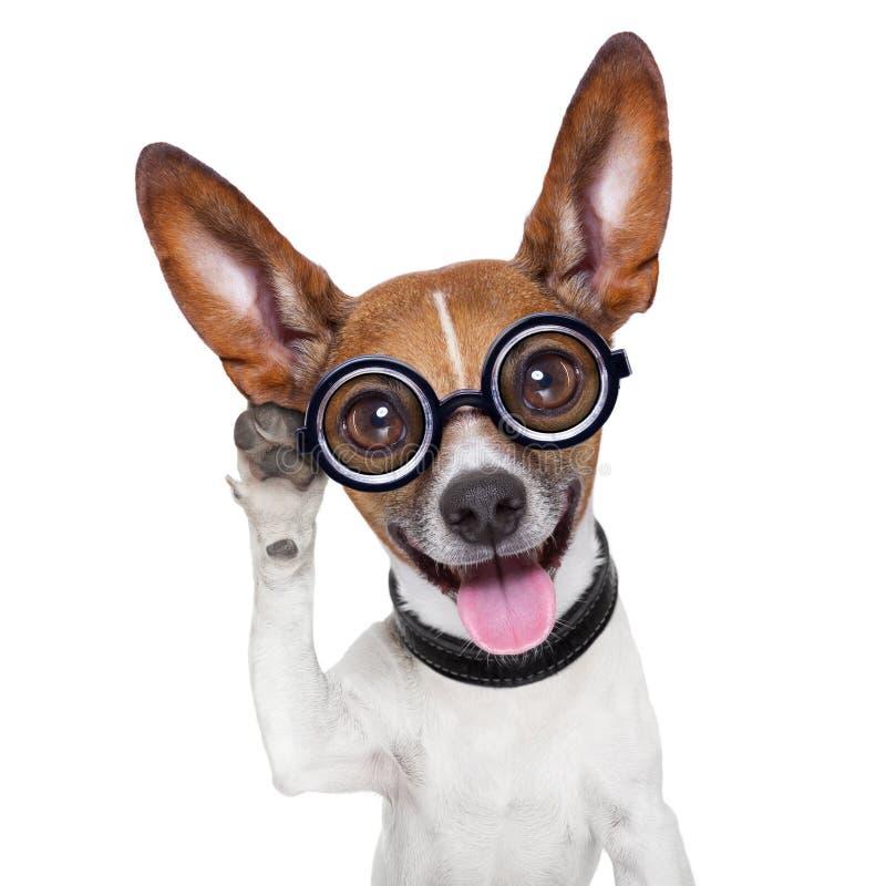 Hund som lyssnar arkivbild