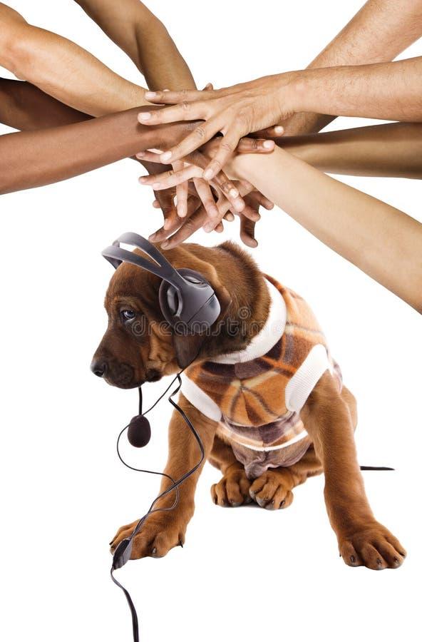 Hund som lyssnar till musik arkivbild