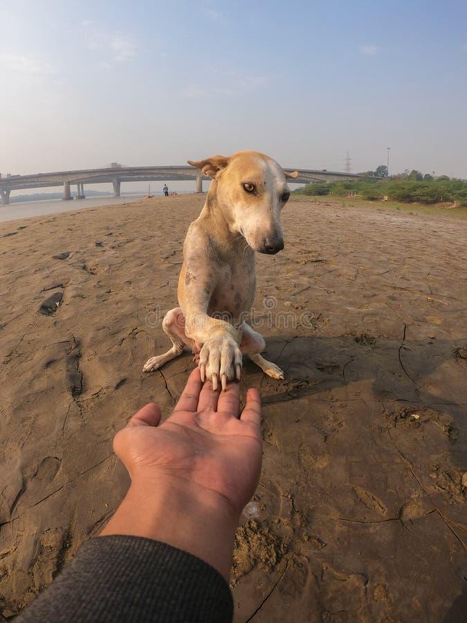 Hund som rymmer mäns hand royaltyfri bild