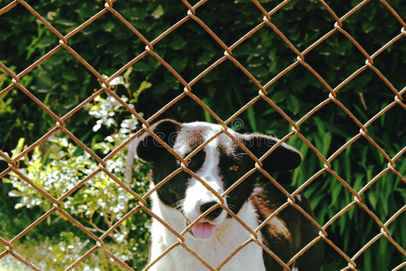 Hund som ser från buren arkivfoto