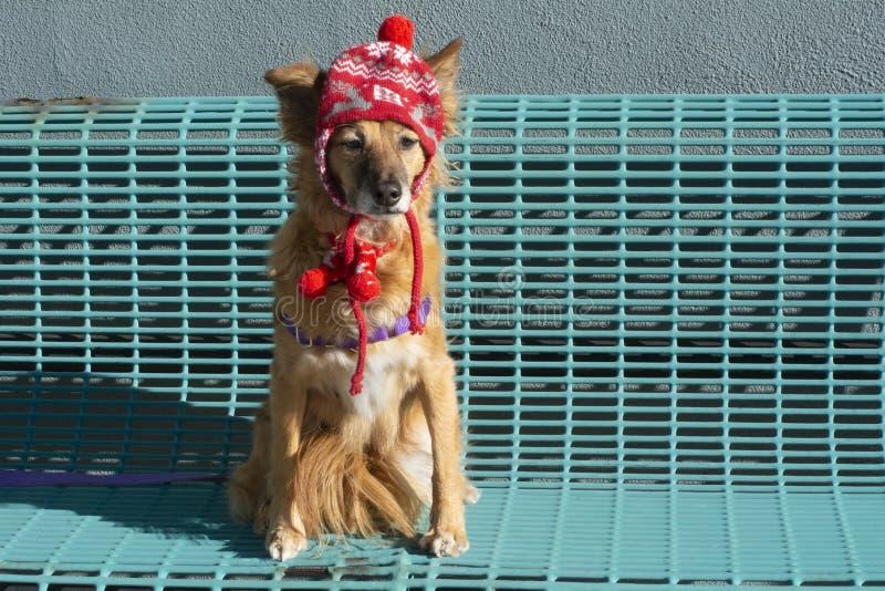 Hund som sitter på bänk i vinterhatt och halsduk royaltyfri fotografi