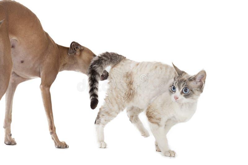 Hund som spelar med en katt arkivbild