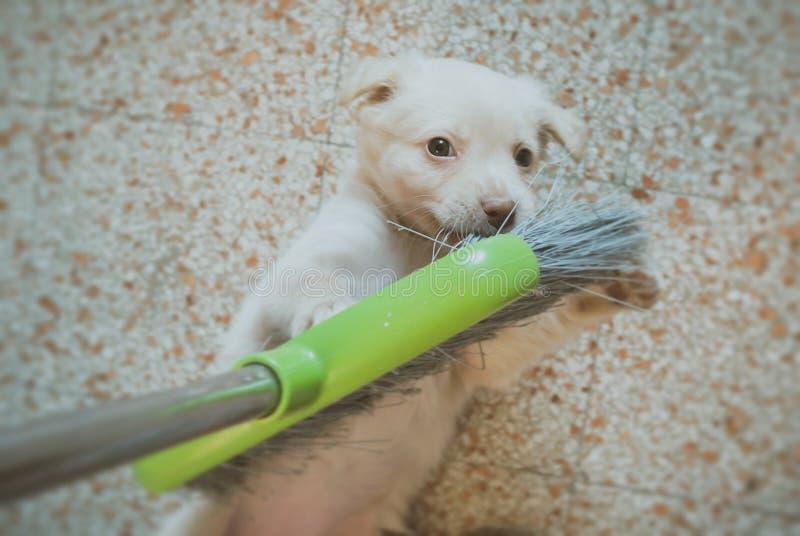 hund som spelar med kvasten royaltyfria foton