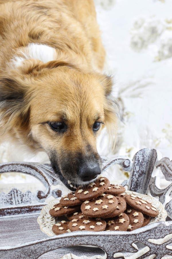 Hund som stjäler en kaka royaltyfri fotografi