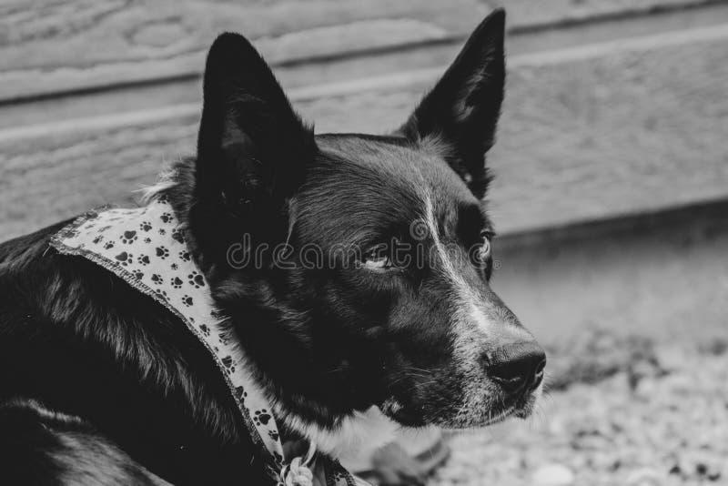 Hund som tycker om fritid arkivbild