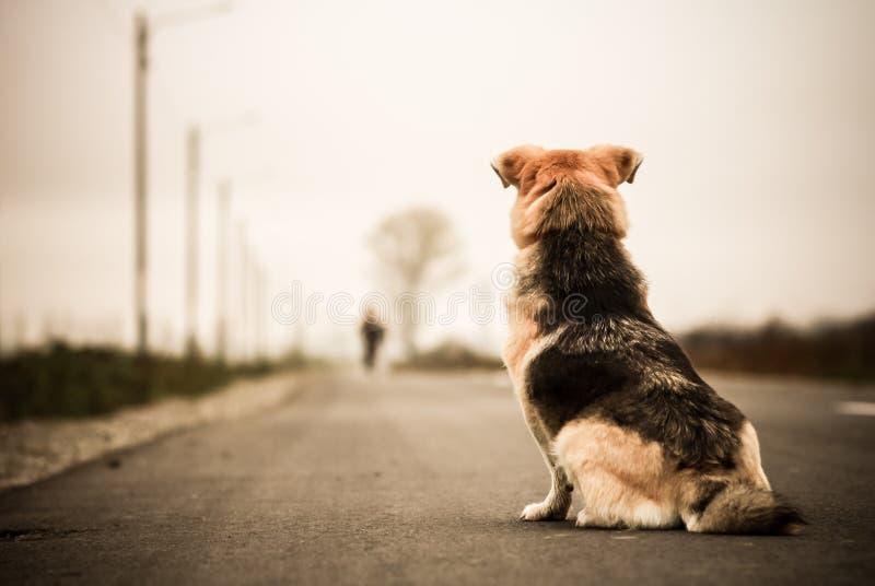 Hund som väntar i gatan arkivfoto