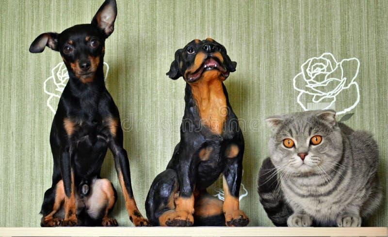 Hund, sparbössa och katt royaltyfri bild