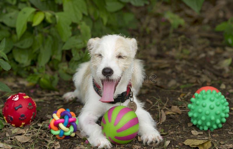 Hund spielt lustiges lizenzfreies stockfoto