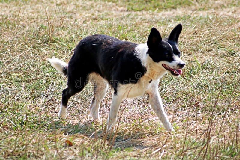 Hund steht auf dem Gras lizenzfreies stockbild