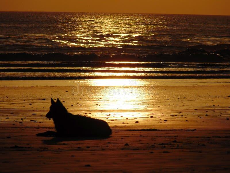 Hund am Strand lizenzfreie stockfotografie