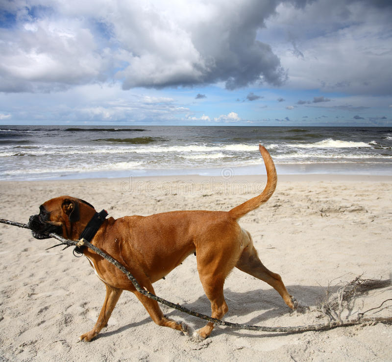 Hund am Strand stockfotografie