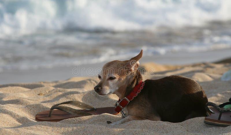 Hund Am Strand Mit Sandla Lizenzfreies Stockfoto