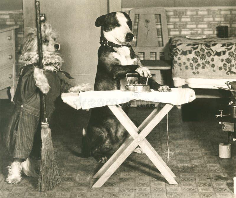 Hund- sysslor fotografering för bildbyråer