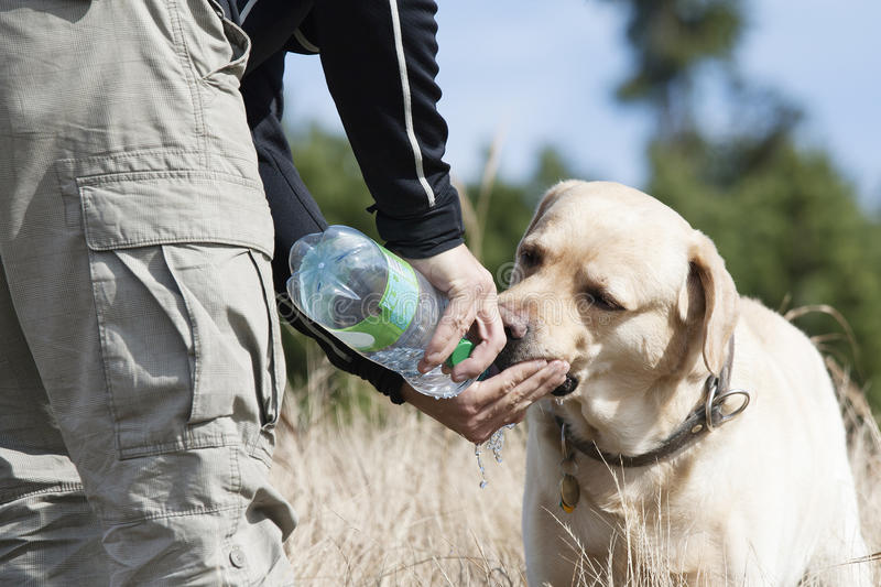 Hund trinkt Wasser stockbild