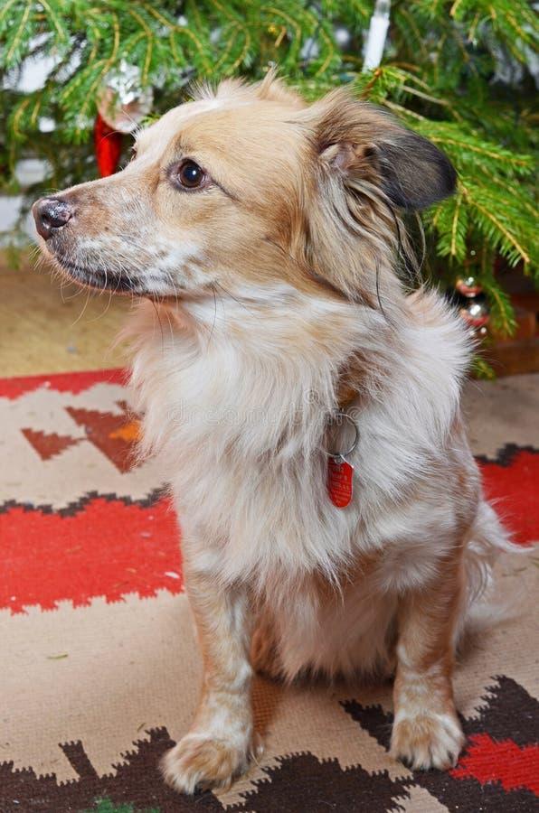 Hund und der Weihnachtsbaum lizenzfreies stockfoto
