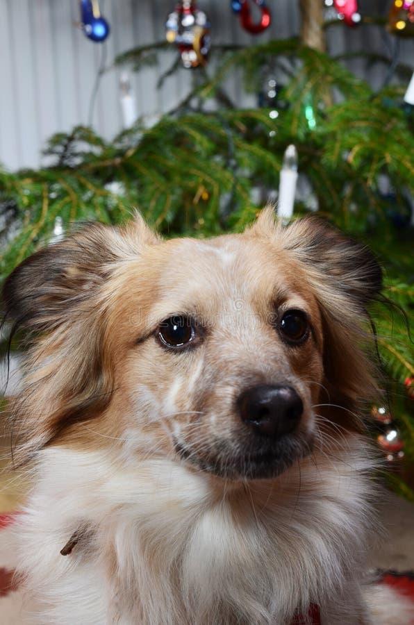 Hund und der Weihnachtsbaum lizenzfreie stockbilder