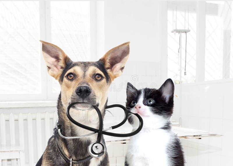 Hund und ein Katzentierarzt lizenzfreie stockbilder