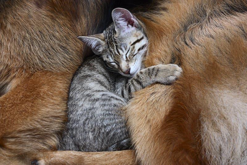 Hund und eine Katze. lizenzfreie stockfotografie