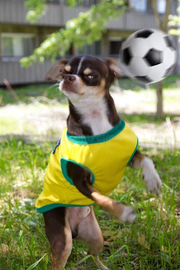 Hund und Fußball stockfoto