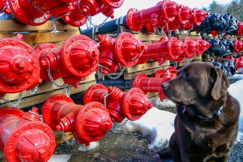 Hund und Hydranten stockfotos