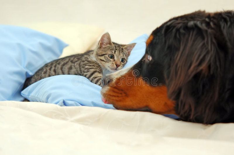 Hund und Kätzchen lizenzfreies stockbild