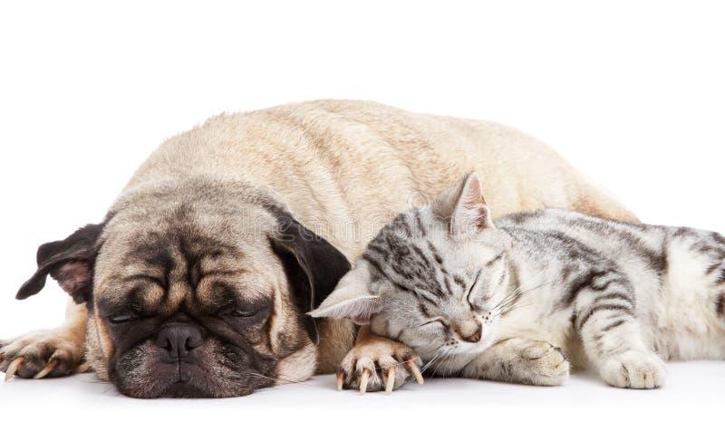 Hund und Katze stockbild