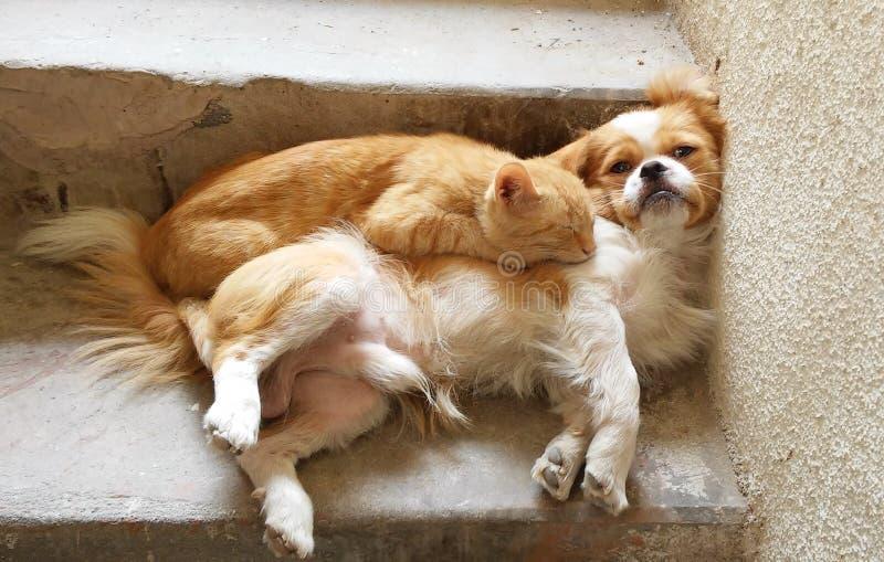 Hund und Katze lizenzfreie stockfotos
