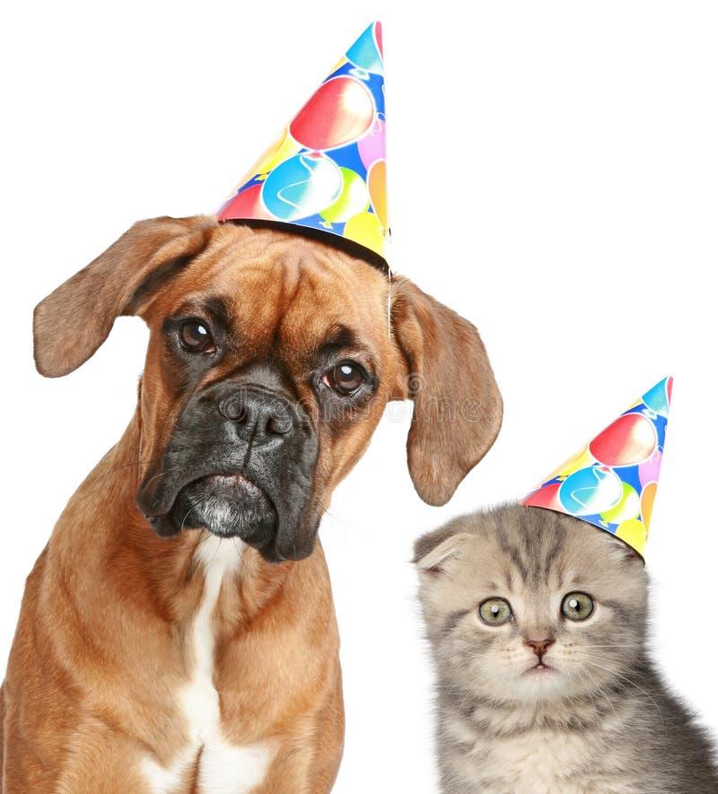 Hund und Katze in der Parteischutzkappe auf weißem Hintergrund stockbild