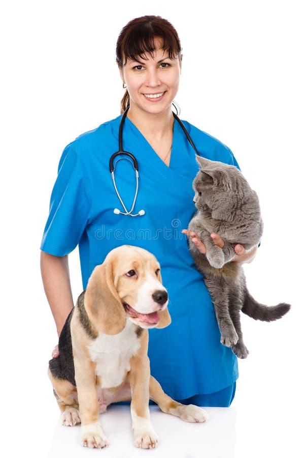 Hund und Katze an der Veterinärüberprüfung lizenzfreie stockfotos