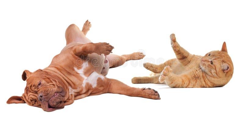 Hund und Katze, die das Drehen gedreht spielt lizenzfreie stockbilder