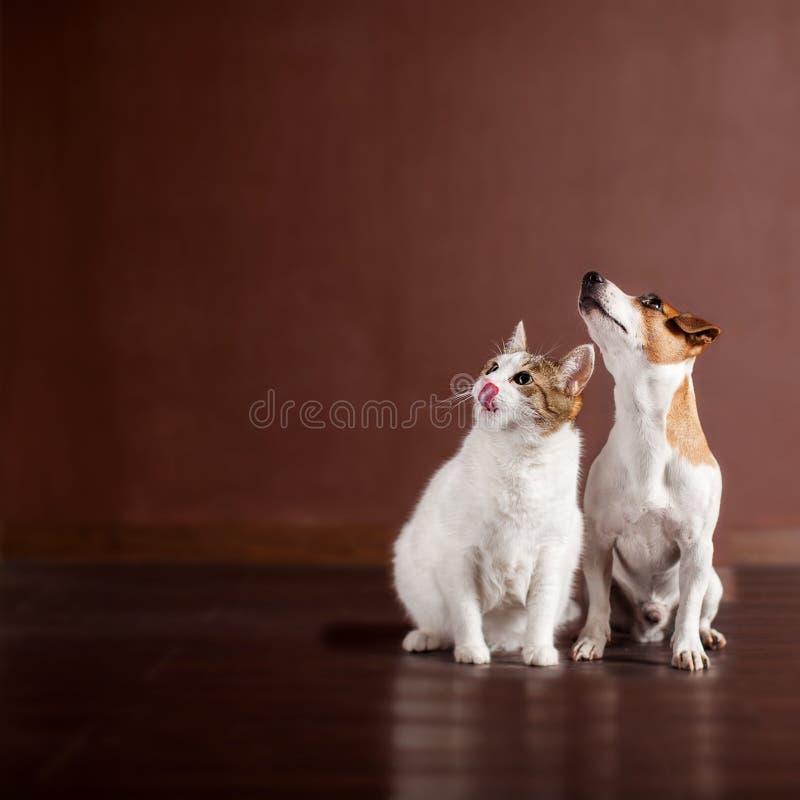 Hund und Katze, die oben schauen lizenzfreie stockbilder