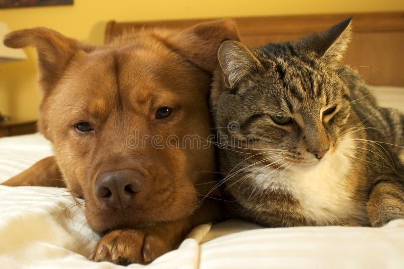 Hund und Katze, die sich entspannen