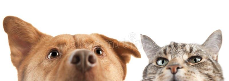 Hund und Katze hoch und nah auf der Kamera stockbild