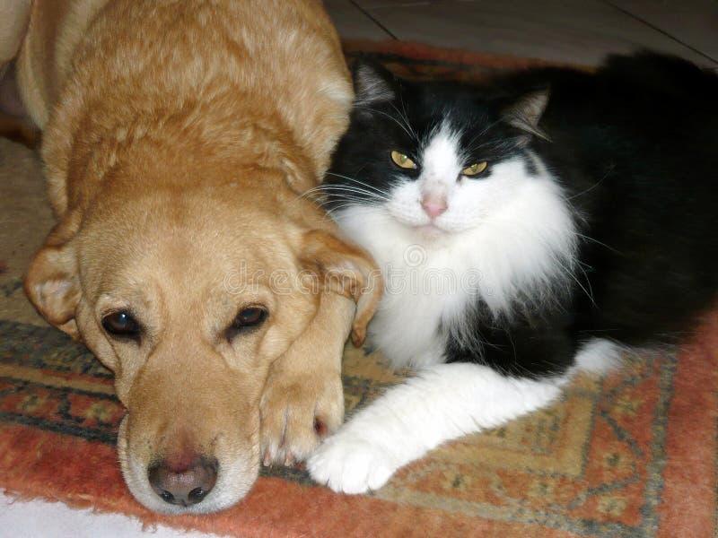 Hund und Katze zusammen stockfotografie