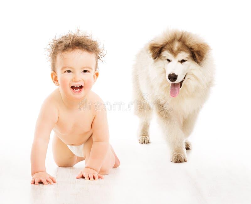 Hund und Kind, kriechendes Säuglingsbaby, Kinderhaustier über Weiß stockbild