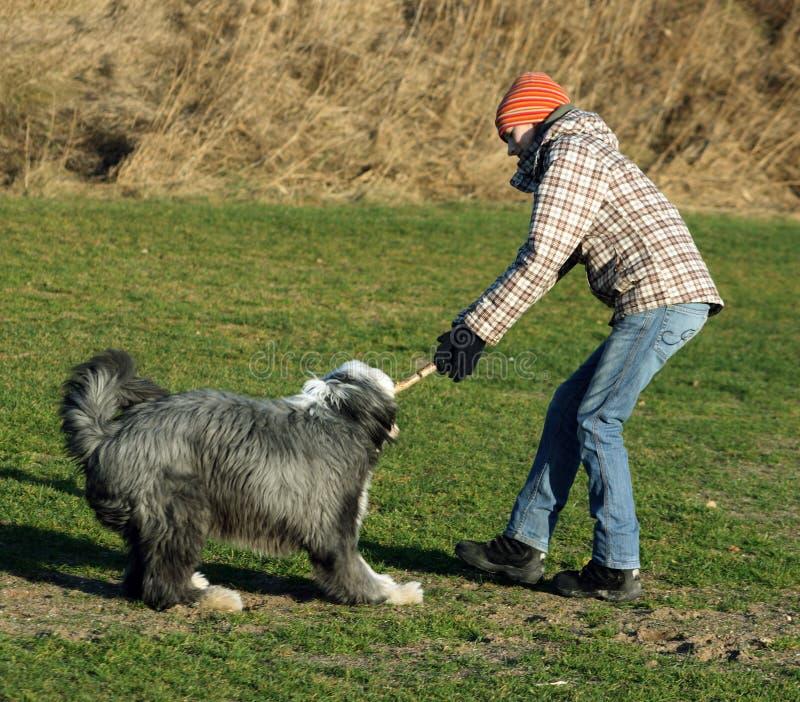 Hund und Mädchen, die über einem Steuerknüppel kämpfen lizenzfreie stockbilder