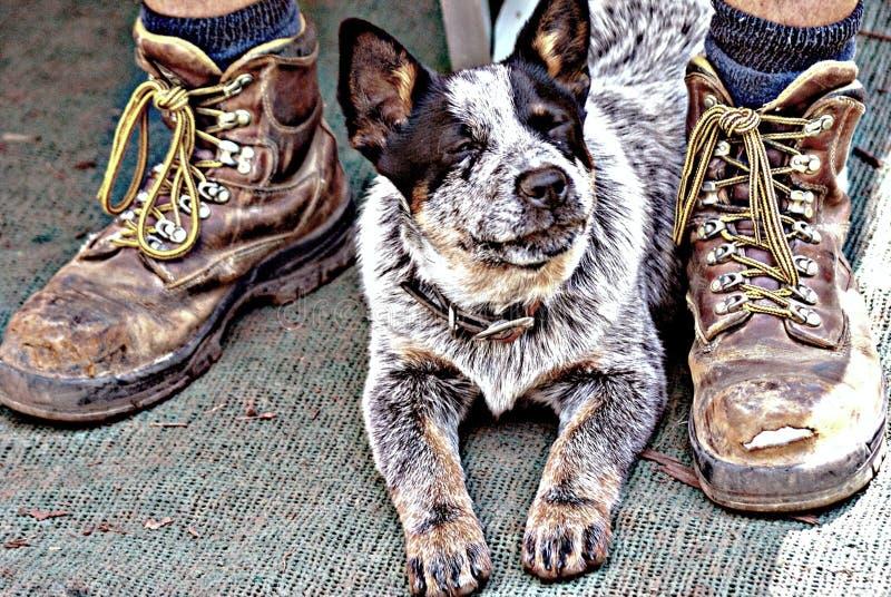 Hund und Meister stockfoto