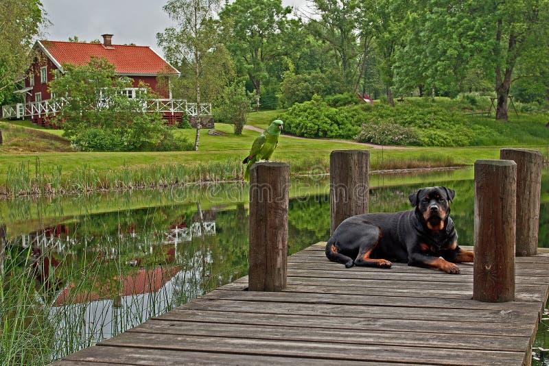 Hund und Papagei in HDR lizenzfreie stockfotografie