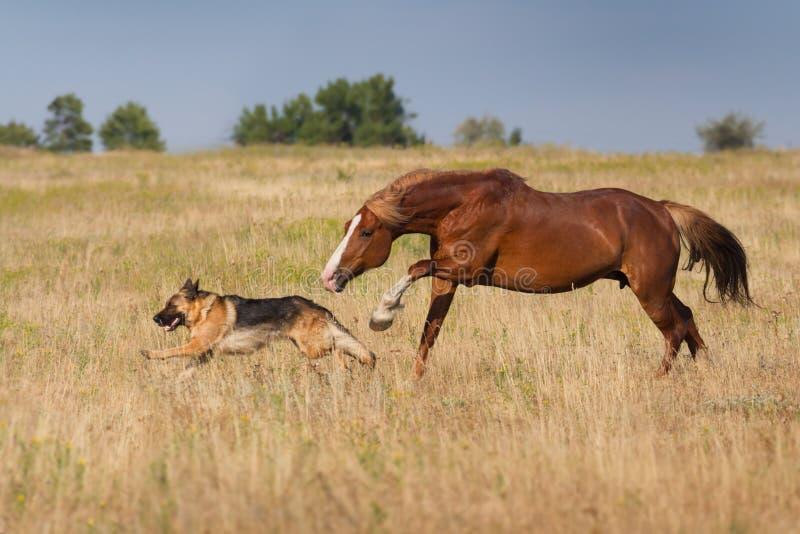 hund und pferd zusammen gelaufen in schnee stockfoto