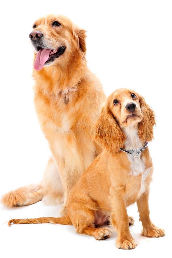 Hund und Welpe