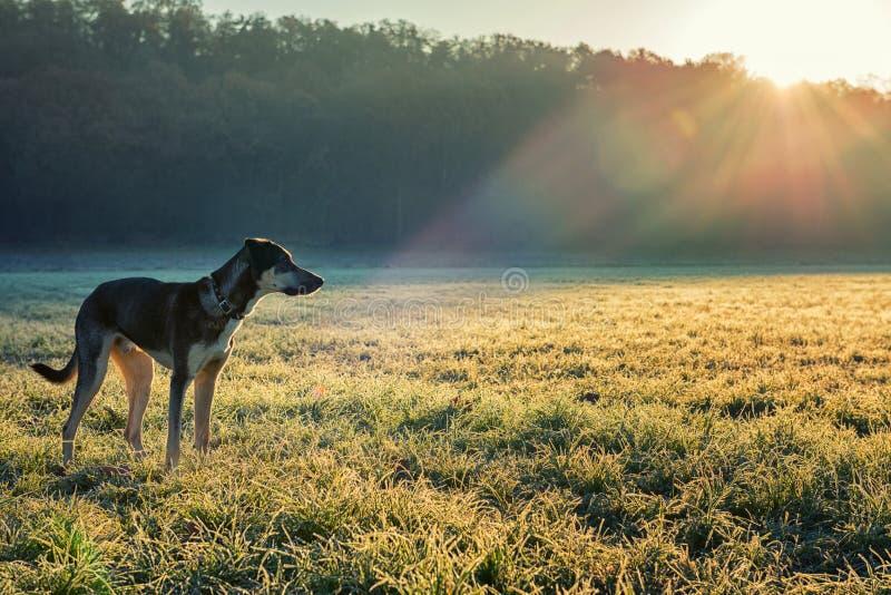 Hund und Wintersonne lizenzfreie stockfotos