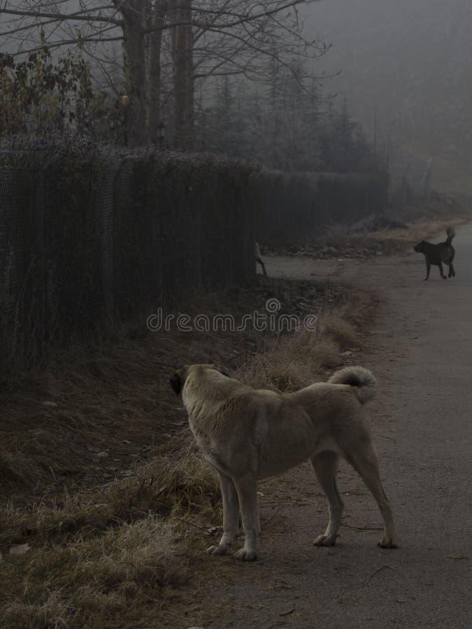 Hund und Zäune lizenzfreie stockfotografie