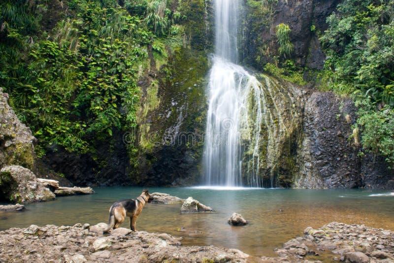 hund under vattenfallet royaltyfria bilder