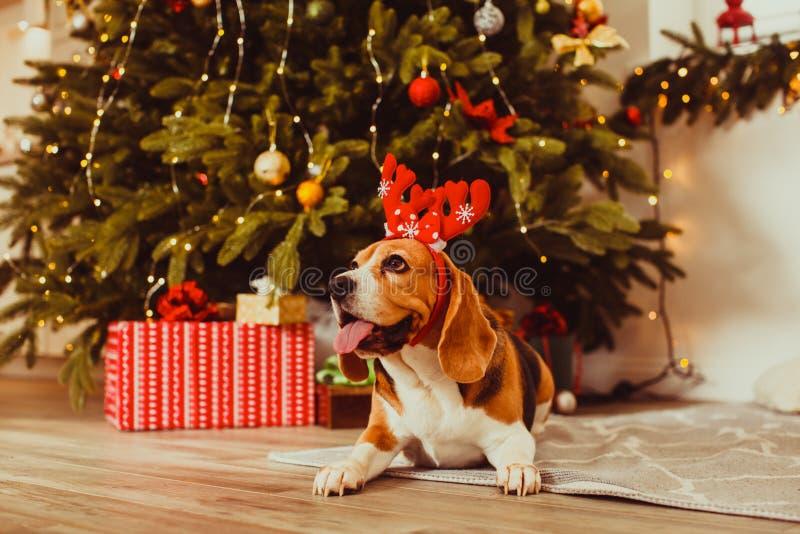 Hund unter dem Weihnachtsbaum zu Hause stockbilder