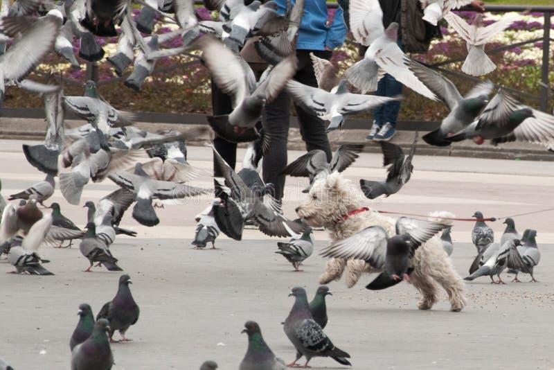 Hund unter Tauben lizenzfreies stockbild