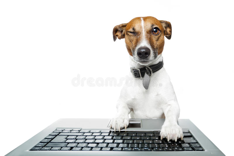 Hund unter Verwendung eines Computers lizenzfreie stockfotografie
