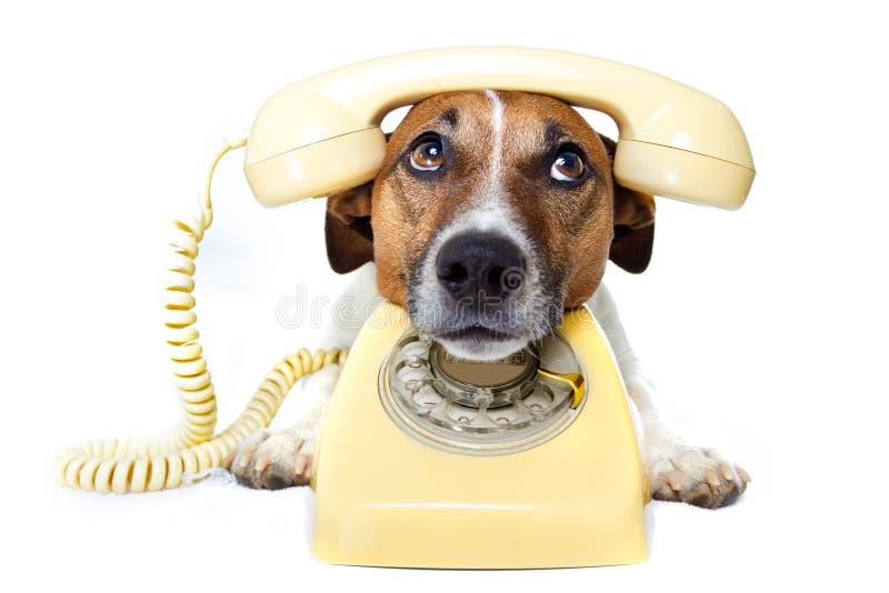 Hund unter Verwendung eines gelben Telefons stockbild