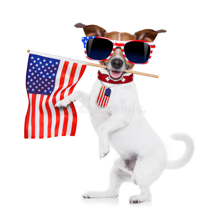 Hund USA lizenzfreies stockfoto