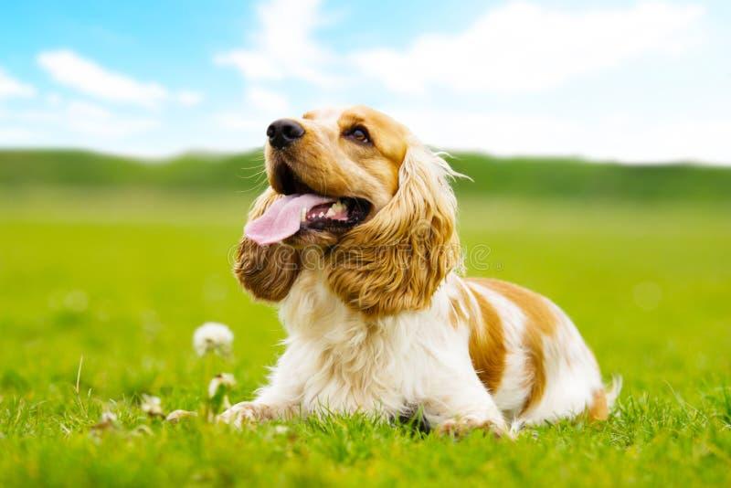 hund utomhus arkivfoton